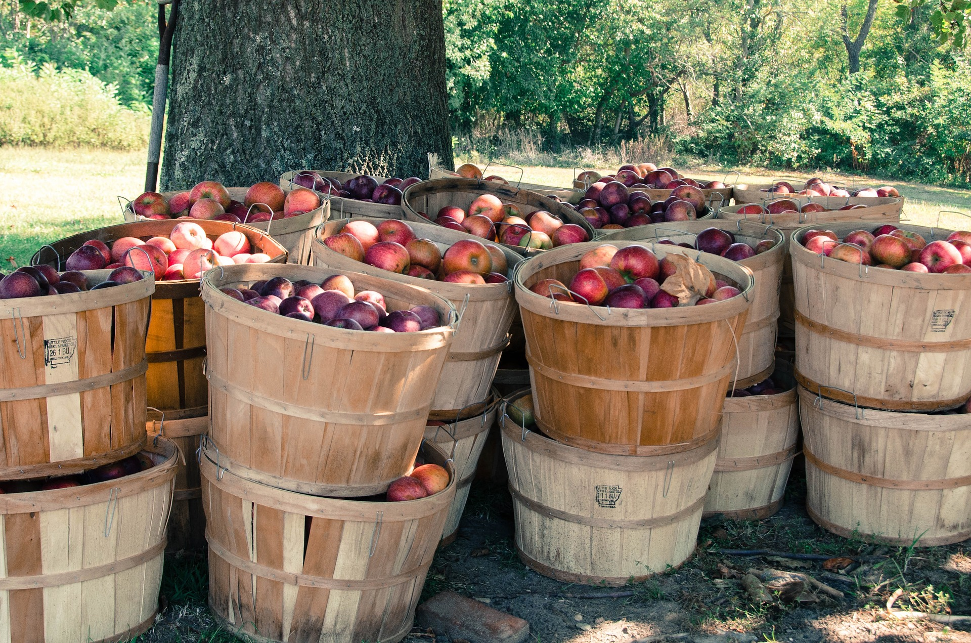 Rock Bottom Ranch Heritage Orchard