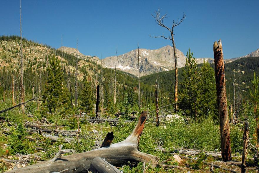 The 1978 Ouzel Fire, in 2006, Rocky Mountain National Park