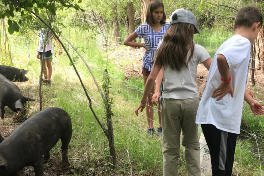 Kids feeding pigs at the ranch