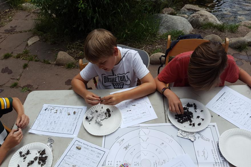Kids dissecting owl pellets.